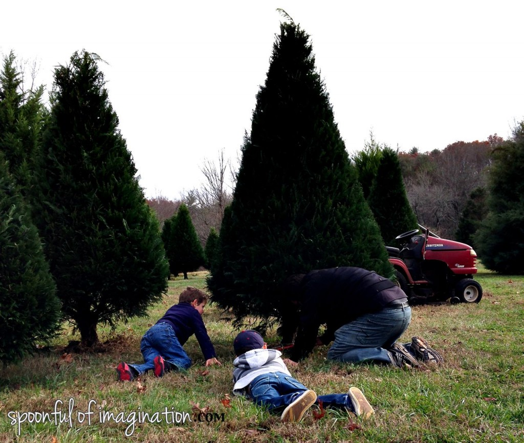 cutting_down_your_christmas_tree