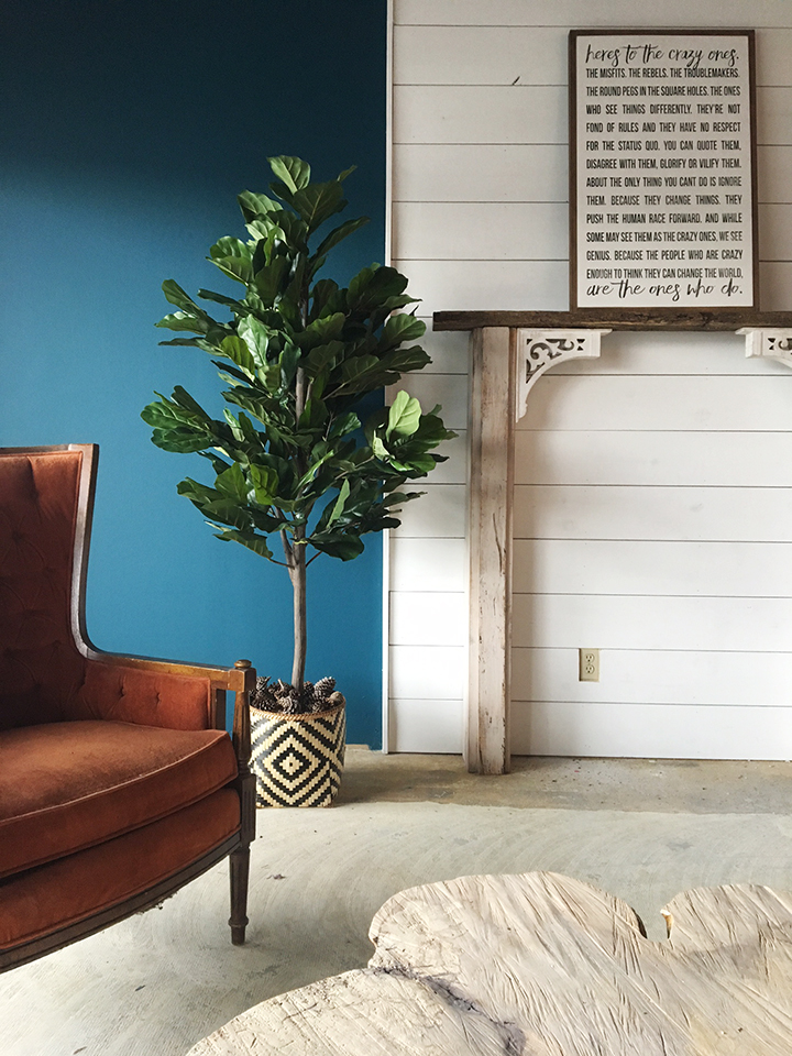 The Perfect Fiddle Leaf Fig Tree